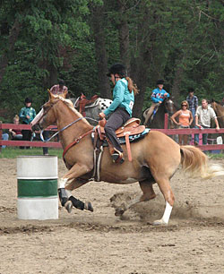 Horses Science Engineering And Technology Rutgers New Jersey 4 H