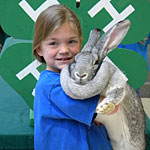 Photo: 4-H member cuddles up to her grey rabbit.