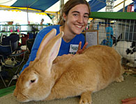 Photo: 4-H member with one large rabbit.