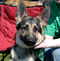 Nj State 4 H Dog Show Dogs Rutgers New Jersey 4 H